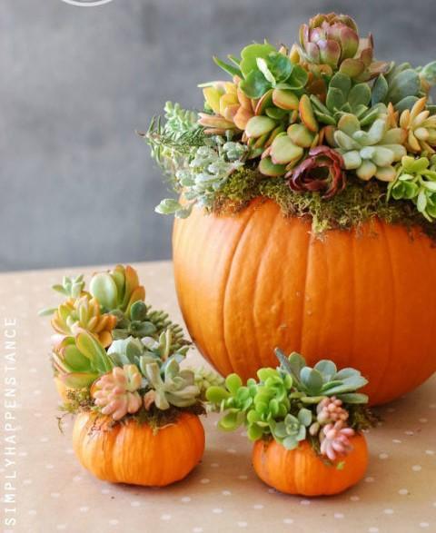 Calabazas coronadas con plantas suculentas y musgo.