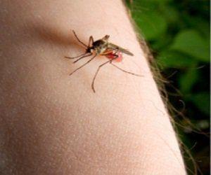 Remedios para mosquitos